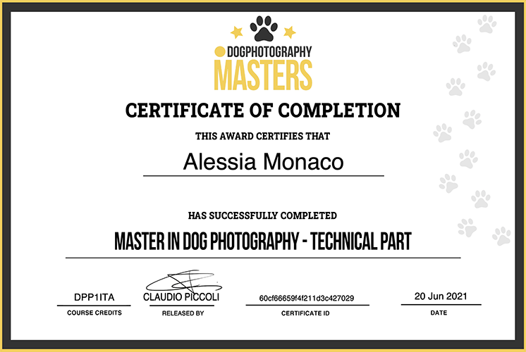Dog photography masters claudio piccoli